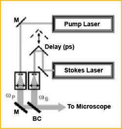 cars-microscopy