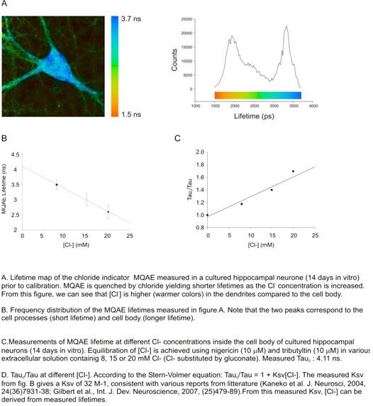 fluorescence1